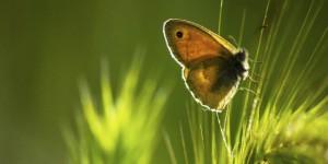 İda'nın Kelebekleri -87
