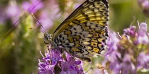İda'nın Kelebekleri -88