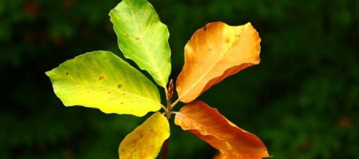 24 Eylül / Yaprak Dökümü Fırtınası