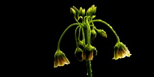 İda'nın Çiçekleri -174