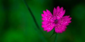 İda'nın Çiçekleri -176