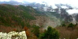 14 Ekim / Dünya Yağmur Ormanları Haftası