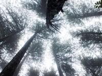 19 Ekim / Ağaç Dikme Zamanı