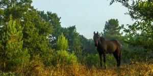 İda'nın Yılkı Atları -8