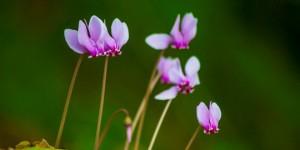 İda'nın Çiçekleri -180