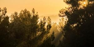 İda'da Güne Veda -59
