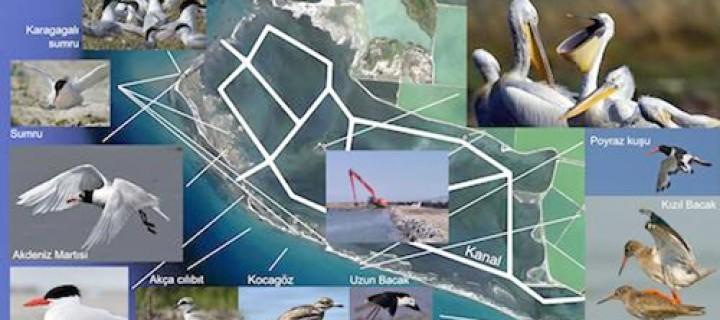 İzmir'in Kuşlarına Kanal Neşteri