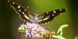 İda'nın Kelebekleri -135