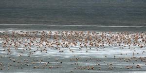 Kuruyan Kuyucuk Gölü Kuş Cennetinin Kuşları Sayıldı