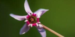 İda'nın Çiçekleri -181