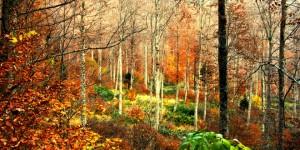 Kıran Yaylası ve Orman