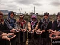 Danıştay: Zeytinliklerde Termik Santral Kurulamaz