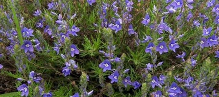 Bahçelerimizin Yorganı Yer Örtücü Bitkiler