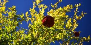 Köyceğiz Gölü Havzası'nda Sonbahar -21