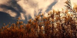 Köyceğiz Gölü Havzası'nda Sonbahar -5