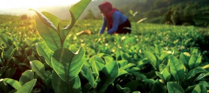 Türkiye'de Organik Üretim Artıyor