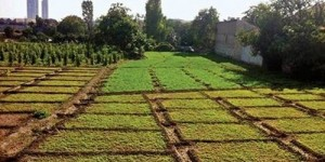 Tarım Alanları Betonlaşıyor
