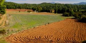 Topluluk Destekli Tarım