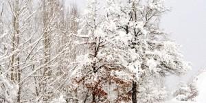 29 Ocak / Ayandon Fırtınası