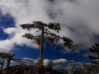 17 Şubat / Fırtına