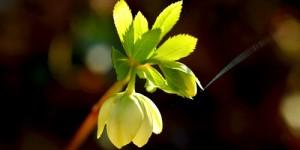 Yenice'nin Çiçekleri -4