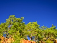 6 Mart / Üçüncü Cemrenin Toprağa Düşmesi. Ağaçlara Su Yürüme Zamanı