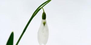 Yenice'nin Çiçekleri -35