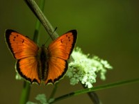 İda'nın Kelebekleri -137