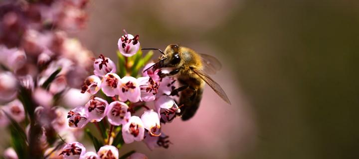 3 Nisan / Çiçeklerin Açılması. Bülbüllerin Ötmesi