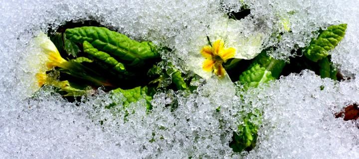 Yenice'nin Çiçekleri -48