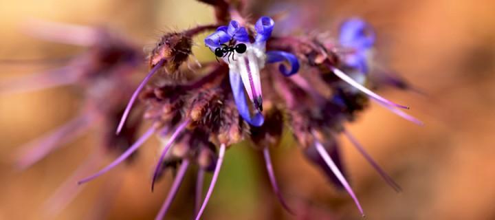 Yenice'nin Çiçekleri -58