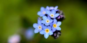 Yenice'nin Çiçekleri -60