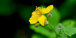 Yenice'nin Çiçekleri -65