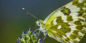 İda'nın Kelebekleri -139