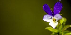 İda'nın Çiçekleri -185