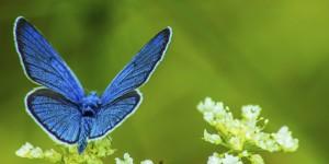 İda'nın Kelebekleri -145
