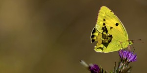 İda'nın Kelebekleri -146