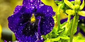İda'nın Çiçekleri -188