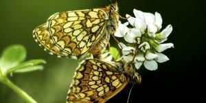 İda'nın Kelebekleri -140