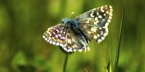 İda'nın Kelebekleri -141