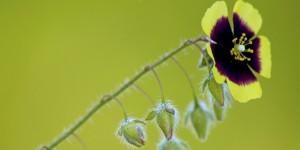 İda'nın Çiçekleri -186