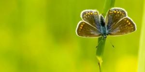İda'nın Kelebekleri -143