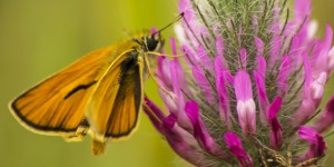 İda'nın Kelebekleri -144