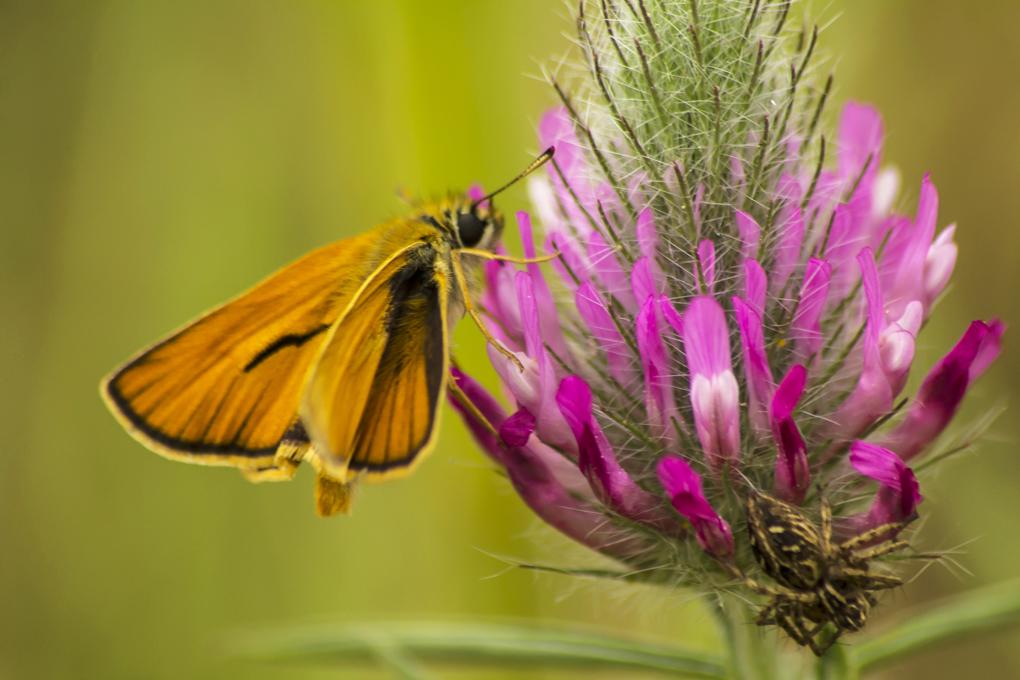İda'nın Kelebekleri -144 | Sırtçantam Gezi ve Kültür Dergisi