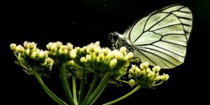 İda'nın Kelebekleri -138