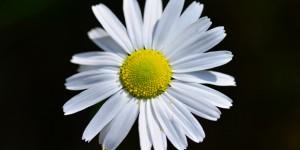 Yenice'nin Çiçekleri -80