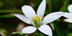Yenice'nin Çiçekleri -83