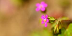 Yenice'nin Çiçekleri -84