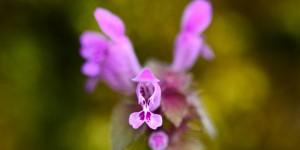 Yenice'nin Çiçekleri -85
