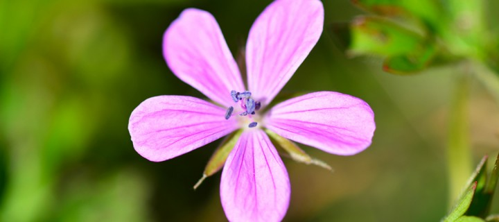 Yenice'nin Çiçekleri -89